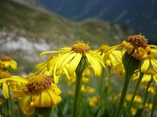 Yellow Mountain Flowers Print by Martin Marinov