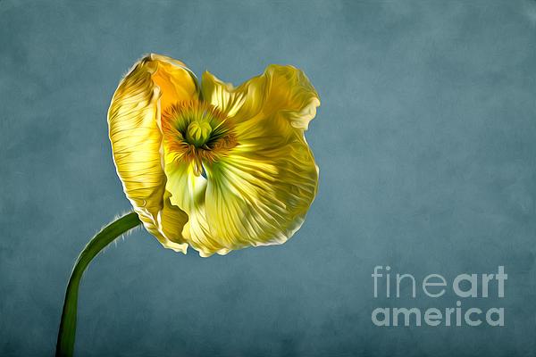 Yellow Poppy Print by Nailia Schwarz