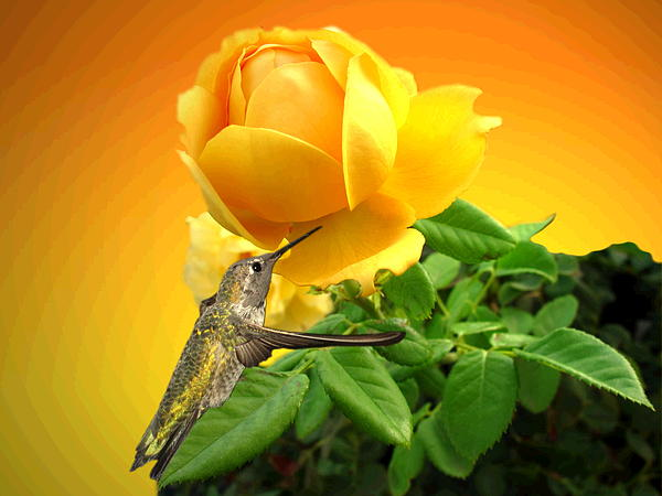 Joyce Dickens - Yellow Rose and Hummingbird 3