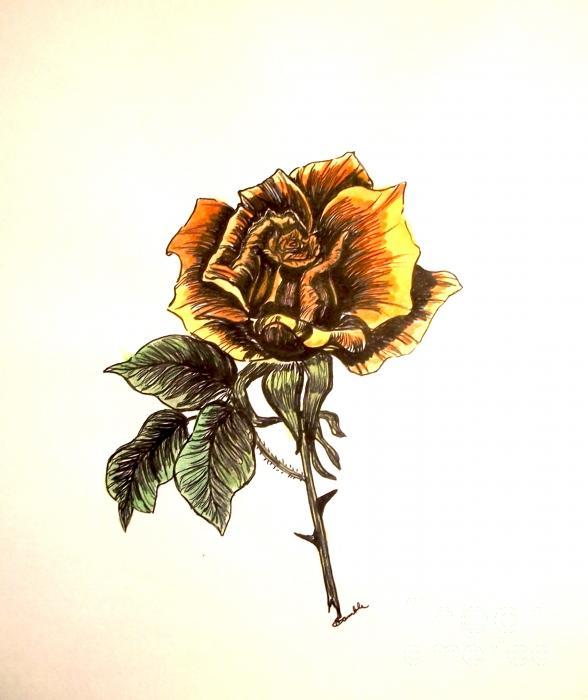 Yellow Rose Print by Nancy Rucker