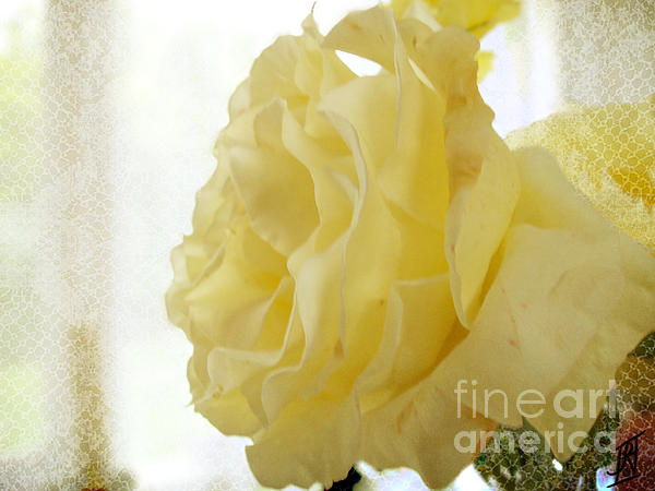 Rosy Hall - Yellow Rose of Summer