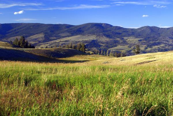 Yellowstone Landscape 3 Print by Marty Koch