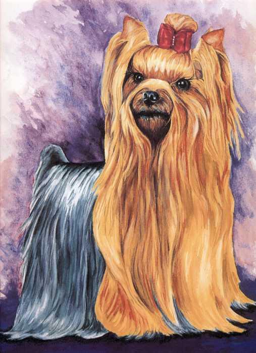 Yorkshire Terrier Print by Kathleen Sepulveda