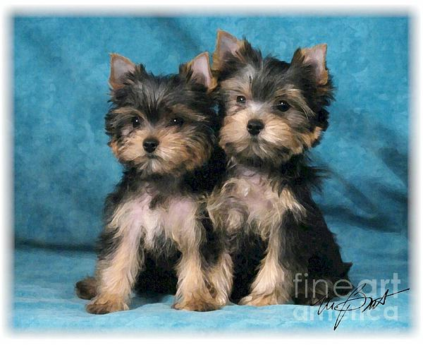 Yorkshire Terrier Pups 2 Print by Maxine Bochnia
