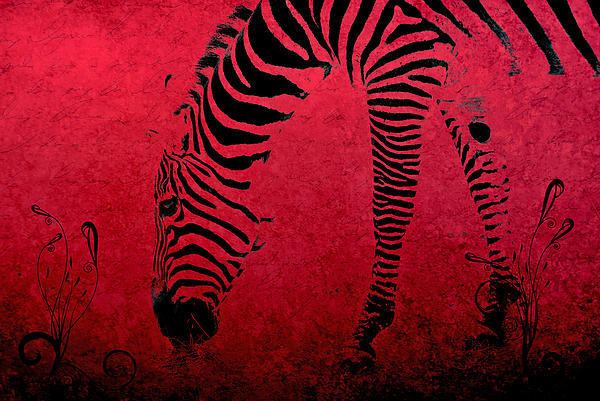 Zebra On Red Print by Aimelle