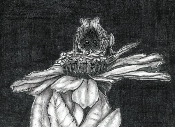 Zinnia Print by Joy Neasley