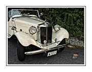 Valuable Metal Prints -      1932 Mg Metal Print by Marcia Lee Jones