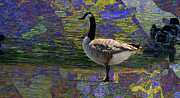Crosswalk Digital Art -  A Gander by Beverly Guilliams