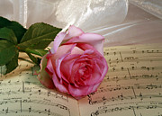 A Tribute To Diana Ross The Rose Print by Inspired Nature Photography By Shelley Myke