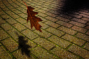 Maple Leaf Prints -  Autumnal Equinox Print by Bob Orsillo