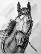Thoroughbred Drawings -  Barbaro by Patrice Torrillo