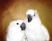 Pet Cockatoo Photos -  Best Friends Cockatoos  by Peggy  Franz