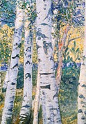 Autumn Woods Prints -  Birch Trees Print by Carl Larsson