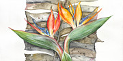 Plant Greeting Cards Painting Framed Prints -  Bird of paradise 04 Elena Yakubovich Framed Print by Elena Yakubovich