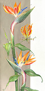 Lush Green Drawings Framed Prints -  Bird of paradise 09 Elena Yakubovich Framed Print by Elena Yakubovich