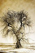 James Bo Insogna Framed Prints -  Bird Tree Fine Art  Mono Tone and Textured Framed Print by James Bo Insogna
