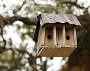 Tin Roof Posters -  Birdhouse for Two Poster by Terry Fleckney