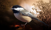 Elaine Manley -  Black Capped Chickadee