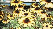 Crosswalk Digital Art -  Black-eyed Susan Sketch by Beverly Guilliams