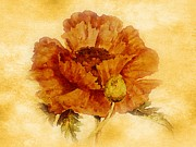 Marilyn Giannuzzi -  California Poppy...
