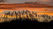 John Pagliuca -  Cape Hatteras sea oats...