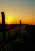 Brushwork Prints -  Country Sunrise Print by Tom Druin