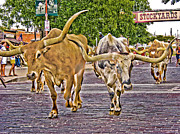 Stockyards Posters -  Downtown Cattle Drive Poster by David and Carol Kelly