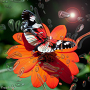 Signed Digital Art Posters -  Enchanted butterfly. The seventh and last.  2013  80/80 cm.   Poster by Tautvydas Davainis