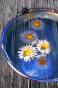Water Color Artist Prints -  Five daisies Print by Veikko Suikkanen