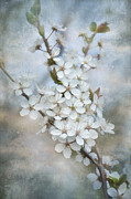 Sakura Digital Art Prints -  Flowering tree Print by Gynt Art