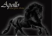 Friesian Stallion Print by Royal Grove Fine Art