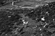 Black Ring Photos -  Horse Trail Kerry Ireland by Aidan Moran