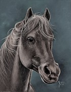 Evelyn  Mendez Portuguez -  Horsehead in gray