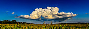 Cornfield Photos -  I Really Dont Know Clouds At All by Randy Scherkenbach