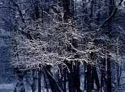 Frost Photo Prints -  Kuz minsky park Print by Anonymous