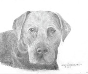 Jim Hubbard -  Labrador Retriever Black