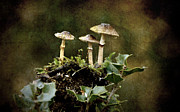 Offer Framed Prints -  Little mushrooms Framed Print by RicardMN Photography