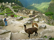 Llama Digital Art Metal Prints -  Llamas at Machu Picchu Peru Metal Print by Ruth Hager