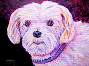 Maltese Dog Painting  Print by Annie Zeno