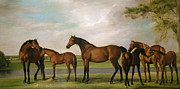 Horse Art -  Mares and Foals Disturbed by an Approaching Storm by George Stubbs