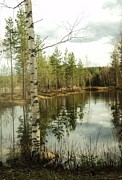 Photography Painting Originals -  Naturally Finland by Lihsus Irig