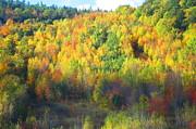 Jeffrey  Akerson -  New Hampshire Fall...