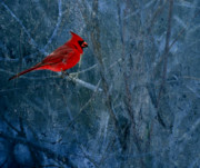 Male Cardinals Posters -  Northern Cardinal Poster by Thomas Young