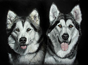 Huskies Pastels Framed Prints -  Pet Portrait A3 16x12 In Malamutes Framed Print by Ksenija Mijokovic