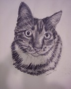 Cat Paw Print Drawings Framed Prints -  Pet Portraits  Framed Print by Lucia Grilletto