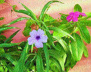 Trudy Storace -  Petunia and Vinca In A...