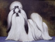 Akc Painting Framed Prints -  Pretty Showdog Shih tzu Framed Print by Melinda Saminski