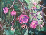 Fushia Prints -  Ptg  Adirondack Wildflower Print by Judy Via-Wolff