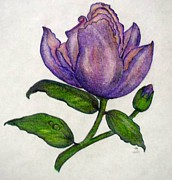 Thinking Of You Drawings -  Purple Beauty by Jan Muse