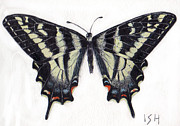 Inger Hutton Metal Prints -  Swallowtail Butterfly  Metal Print by Inger Hutton
